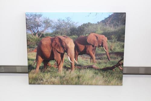 "Elephants 16"" x 12"""